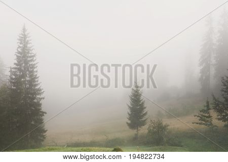 Foggy morning landscape. Morning mist in the field with pinetrees, landscape background