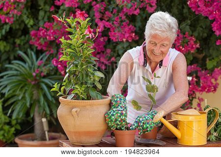 active senior woman gardening potting plants