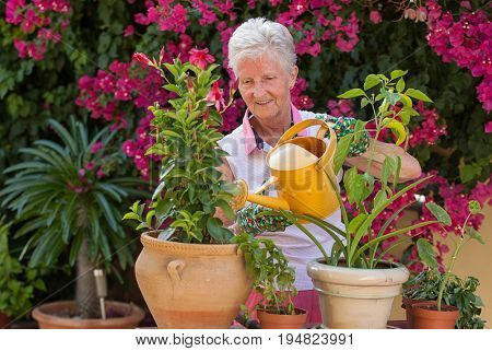 active retiree gardener watering pot  plants