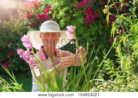 smiling senior woman picking flowers in garden in summer