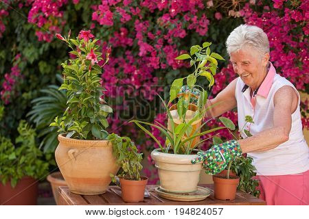 plant care, senior woman watering pot  plants