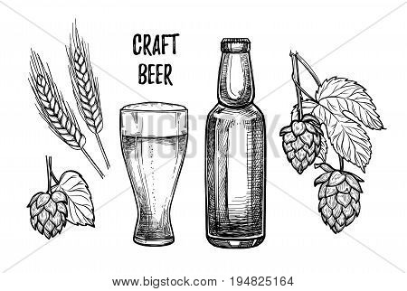 Hand Drawn Vector Illustration - Craft Beer (malt, Hop, Beer Glass, Bottle). Octoberfest Or Beer Fes
