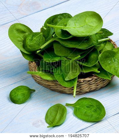 Pile of Small Raw Spinach Leafs in Wicker Plate closeup on Blue Wooden background