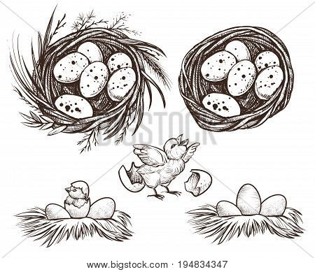 Nest set and hatching chicken. Vector hand drawn line illustration of eggs in nest and nestling.