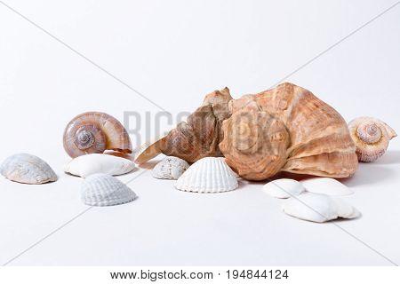 several colored aquarium seashells on white background