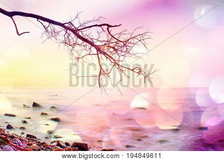 Film Grain.  Romantic Atmosphere,  Colorful Sunset At Sea. Stony Beach With Bended Tree And Hot Pink