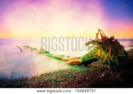 Film Grain. Pink Sky Above Smooth Smoky Water Level. Lonely Fallen  Tree On Empty  Stony Coastline.