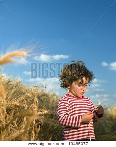 little child in a wheat field