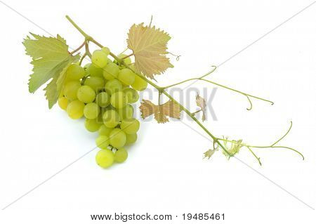 cluster of green grapes on  branch isolated on white