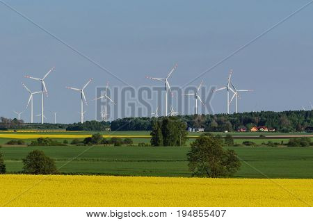 RAPE AND WIND FARM - Spring landscape of western Poland