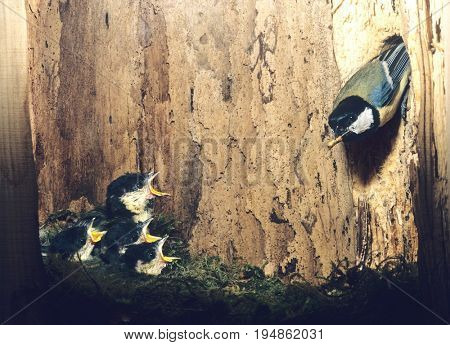 Parent Bird Feeding Nestlings