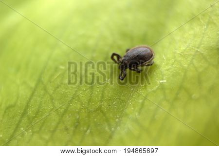 Small mite on the green litter macro