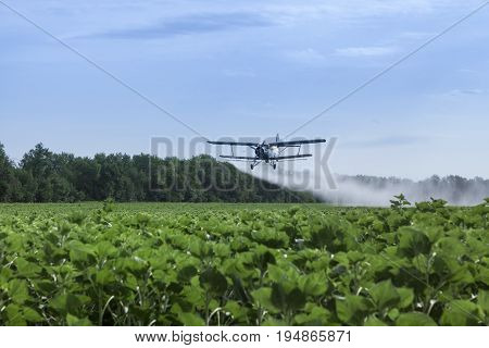 Agricultural airplane is flying under the sunflowers field and spraying water	Honestly, it is not a clear water, it is diluted fertilizers. Biplane is flying close to the ground.