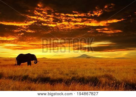 Lonely Big Elephant against sunset in savannah. Serengeti National Park. Africa. Tanzania.
