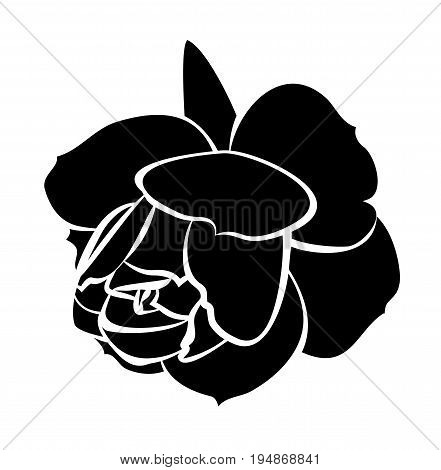 vector black rose isolated on white background