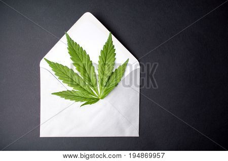 Marijuana Leaf In An Envelope
