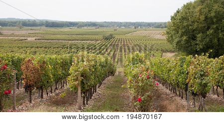 Panoramic View Of A Vineyard In The Bordeaux Countryside - France