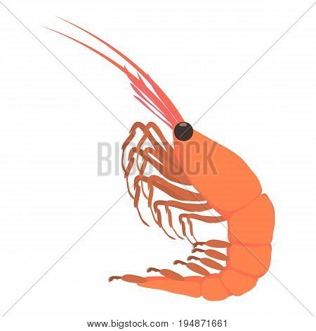 Shrimp icon. Cartoon illustration of shrimp vector icon for web isolated on white background
