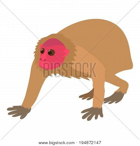 Bald wakari icon. Cartoon illustration of bald wakari vector icon for web isolated on white background