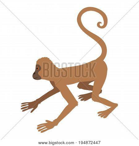 Playful monkey icon. Cartoon illustration of playful monkey vector icon for web isolated on white background