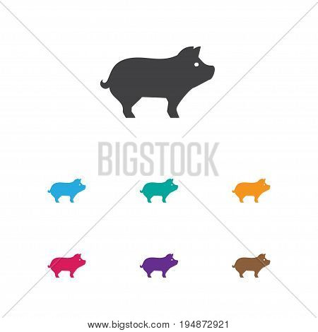 Vector Illustration Of Animal Symbol On Hog Icon. Premium Quality Isolated Pig Element In Trendy Flat Style.