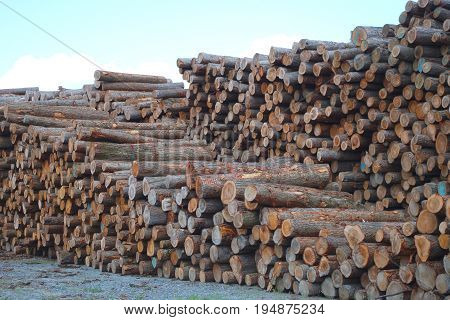 lumber yard wood stack timber construction lumbering forestry cut