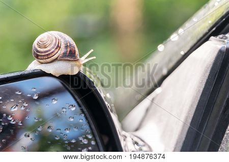 Snail crawls along the side mirror of the car rear view