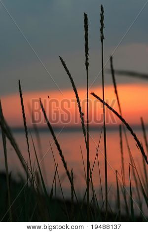 Landscape. The sun rises on wild lake and is hidden in the large cloud. Silhouettes of a grass and cane. The spiders and other insects in a grass are visible.