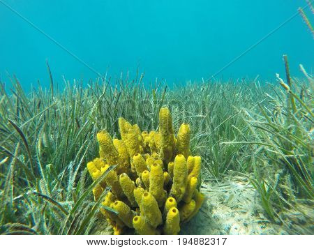 algae of the Aegean Sea
