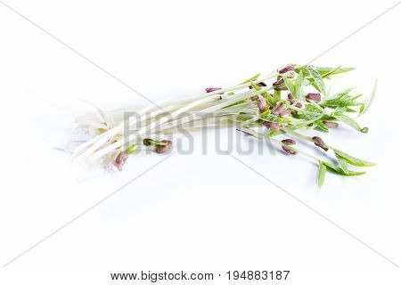 Green Soybean Sprouts