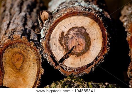 Close up of cross section of log in woodpile
