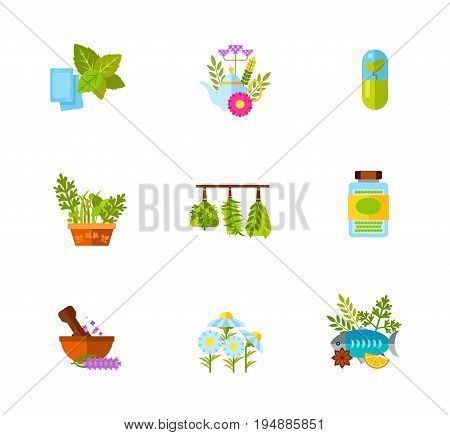 Herb icon set. Mint gum Herbal tea Herbal supplement Herbal garden Herbs Dried spice Mortar Chamomile Fish with herbs