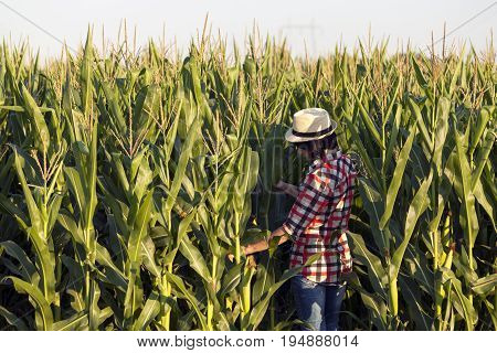 Woman Farmer, Agronomist By Profession, Is In The Field With Corn