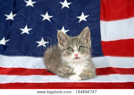 One small gray and white tabby kitten laying on the American flag looking directly at viewer. Patriotic kitty.