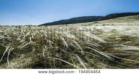 Landscape of mountain steppe . Feather on a background of blue sky .