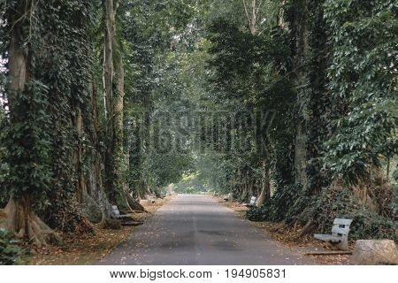 long road between the trees at Bogor west java indonesia