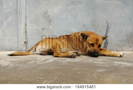 Hungry stray dog wait someone give food on dirty ground beside old wall for background