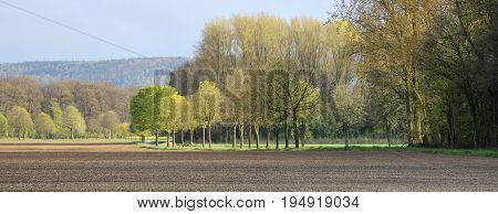 Panorama view on a rural tranquil landscape with lines of trees woods and fields in Lower Saxony North Germany