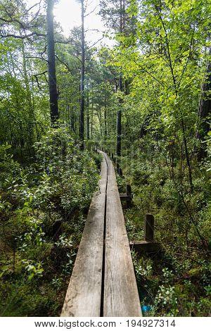 a narrow footbridge through a green forest
