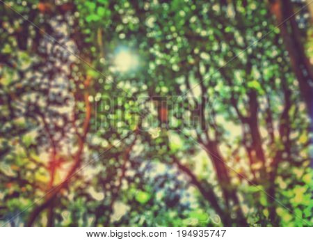 Abstract colorful background. Defocus beneath tree branches and leaves under sunlight.