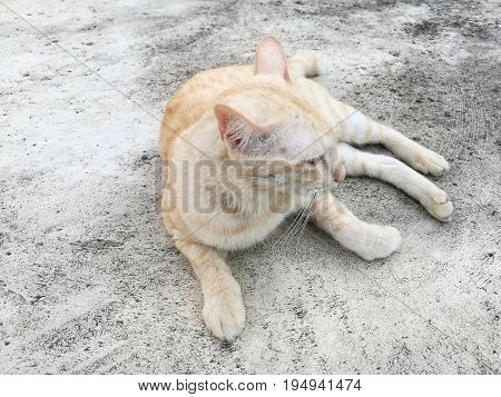 Light brown cat lying on concrete floor; its head turn left (showing right side of face)