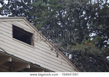 Looking up at the pitched roof and single open window of an abandoned army barrack and the tops of the neighboring trees..