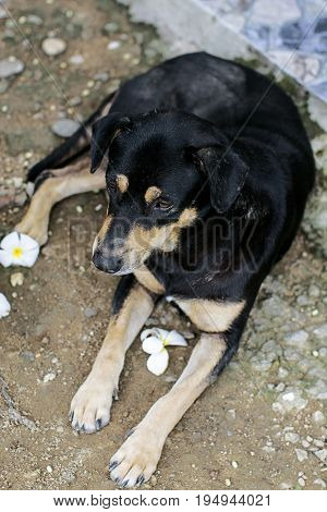 mutt dog sad lying down pet mixed