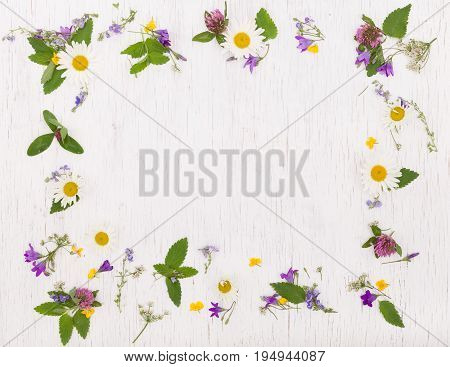 Top view on beautiful wild flowers on white wooden background.  Frame wreath. Summer flowers, leaves and petals.  Clover, daisy, bell-flowers, forget-me-not