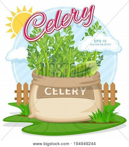 Vector illustration of eco products. Celery in burlap sack. Full sacks with fresh vegetables. Bag with harvest on the summer garden. Harvesting and food concept