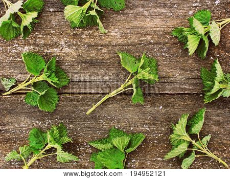 fresh stinging nettle on a wooden background .