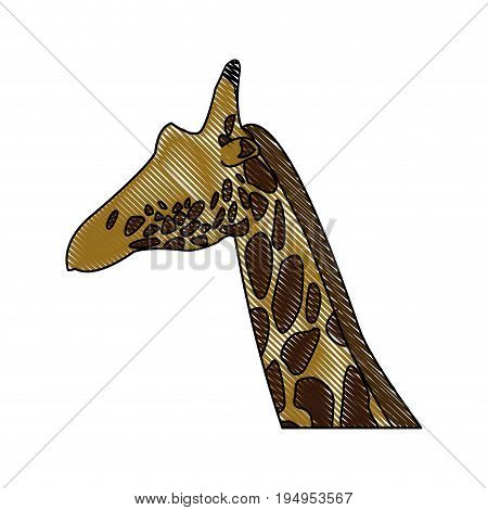 head giraffe animal herbivore african wildlife vector illustration
