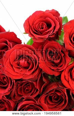 Beautiful red roses bouquet on white background.