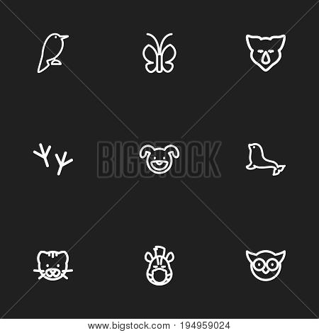 Set Of 9 Editable Animal Icons. Includes Symbols Such As Horse, Predator Bird, Dogfish And More. Can Be Used For Web, Mobile, UI And Infographic Design.