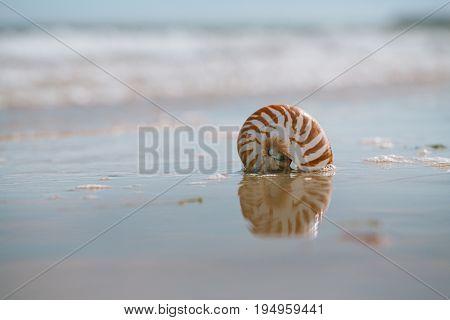 British summer  beach with nautilus pompilius sea shell